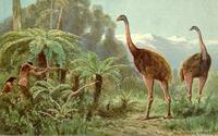 Taschenbücher von Ernst Probst über Vogelriesen aus der Urzeit