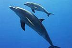 Doppelt Freude schenken mit einer Delfinpatenschaft zu Weihnachten