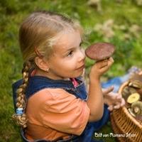 showimage Bayerischer Wald - Pilze, Schwammerl sammeln im Urlaub