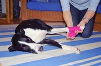 showimage Was Menschen hilft, kann für Tiere tödlich sein