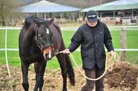 Englische Horse-Grooms