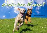 showimage Beliebte Hundenamen für Rüden