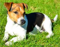 Hund oder Katze zugelaufen – was tun?