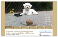Hundeschule München - eine Wohltat für Hund und Hundehalter