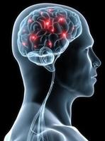 Vom Gehirn-Besitzer zum Gehirn-Anwender
