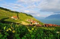 Wein-Entdeckungstour im Genferseegebiet