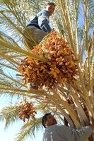 Erfolgsgeschichte aus dem krisengeschüttelten Tunesien