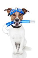 Erster Dog Nose Day im Lorscher Waldschwimmbad
