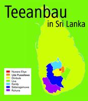 150 Jahre Spitzen-Tee aus Sri Lanka: Neue Ernten machen munter