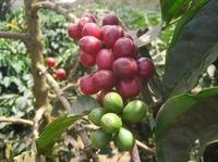 Privatrösterei Pascucci: Premium-Caffes, mit Präzisionsverfahren gebrüht