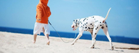 Ostseeurlaub mit Kind, Kegel und Hund