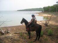 Reisebricht auf Mit-Pferden-reisen.de: Pferde ohne Ende im  North Texas Horse Country