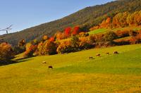 Herbstgenuss im Naturhotel Südtirol