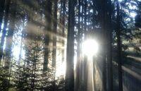 Erster Allgäuer Premium-Winterwanderweg in Oberstaufen
