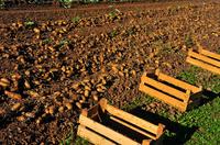 Genussland Südtirol: Die Pusterer Kartoffel