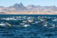 Relax & Resource & Whale Watching auf La Gomera