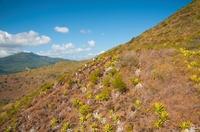 Dodo Trail Mauritius - Größter Laufevent der Insel