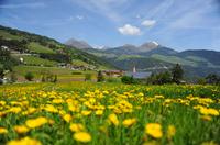 Südtirol: Frühlingserwachen auf dem Bauernhof