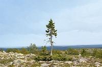Wildnis-Tour zum ältesten Baum der Welt
