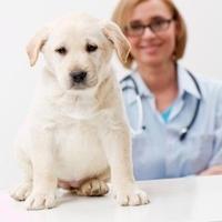 Hundekrankenversicherung - was ist der Vierbeiner wert?