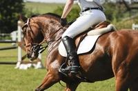 Mit der Uelzener Reiterunfallversicherung immer fest im Sattel