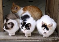 Katzenkrankenversicherung: Damit es der Samtpfote lange gut geht