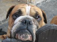 Bund Deutscher Tierfreunde ist  anerkannter Ausbildungsbetrieb