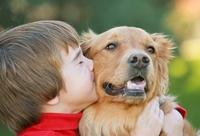 Hundeoperationsversicherung: Vorsorge und Kostenschutz