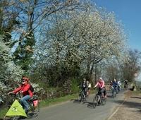 Buntes Blütenmeer an der Deutschen Weinstraße  - Zigtausende  blühende Obstbäume