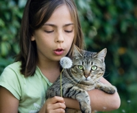 Katzenkrankenversicherung: ein Vergleich