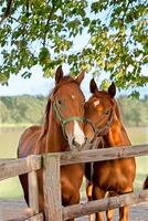 Pferdehaftpflichtversicherung: Wenn sich zwei Artgenossen kabbeln, können die Folgen schwerwiegend sein