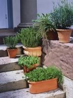 Kräutergenuss aus dem eigenen Garten