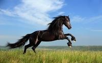 Rhion Pferdehaftpflicht - immer sicher im Sattel