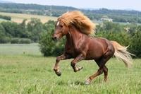Für Pferdehalter ist die Pferdeversicherung zum Schutz von Tier und Mensch unverzichtbar