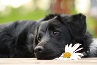 Hundehaftpflichtversicherung: Anstieg der Hundeattacken in der Bundeshauptstadt