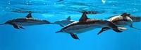 EDEKA stoppt Thunfisch-Bezug nach Tierschützer-Protesten