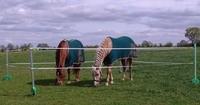 Produkttest und Tipp auf Mit-Pferden-reisen.de: RoFlexs