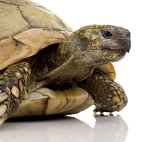 markt.de feiert Weltschildkrötentag