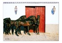 Wandbilder mit Pferdefotografien von Gabriele Boiselle