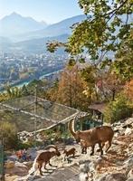 50 Jahre Alpenzoo Innsbruck