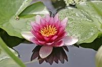 Pflanzen für die Wellnessoase Gartenteich