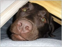 Bund Deutscher Tierfreunde bittet: EM-Fanmeilen ohne Hund