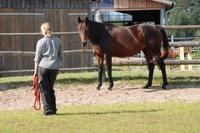 Pferdeflüstern - Persönlichkeitstraining mit Pferden