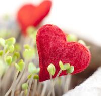 Für 50 Online-Dating Portale die Nutzungsrechte gesichert, das Closing soll bis 31.07.2012 abgeschlossen sein
