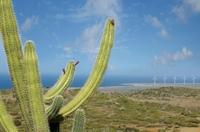 Aruba bald erste Volkswirtschaft ohne fossile Brennstoffe?