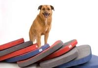 Neue, gesunde Hundekissen für Hunde