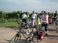 Weinlese in der Pfalz  bequem und genussvoll mit Pedelecs  erleben