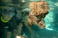Florida: Discovery Cove jetzt mit neuen Schwimmabenteuern