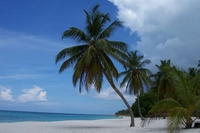 """Dominikanischer Strand """"Saona"""" wurde zum besten Strand 2012 gewählt"""