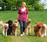 showimage 19. Juli  Ein gut erzogener Hund ist kein Zufall: Autorität und Disziplin sind unerlässlich